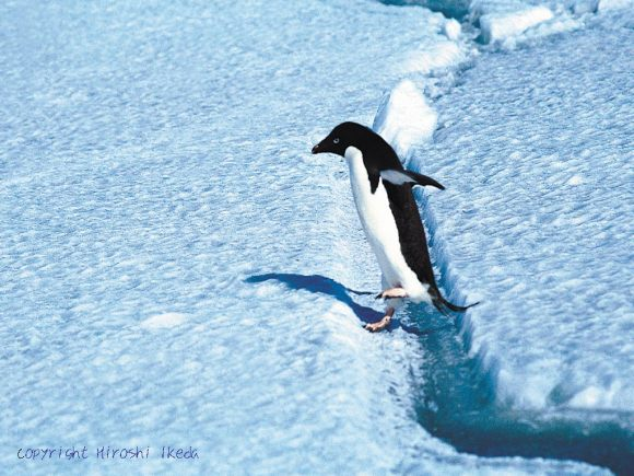 企鵝黑幫01