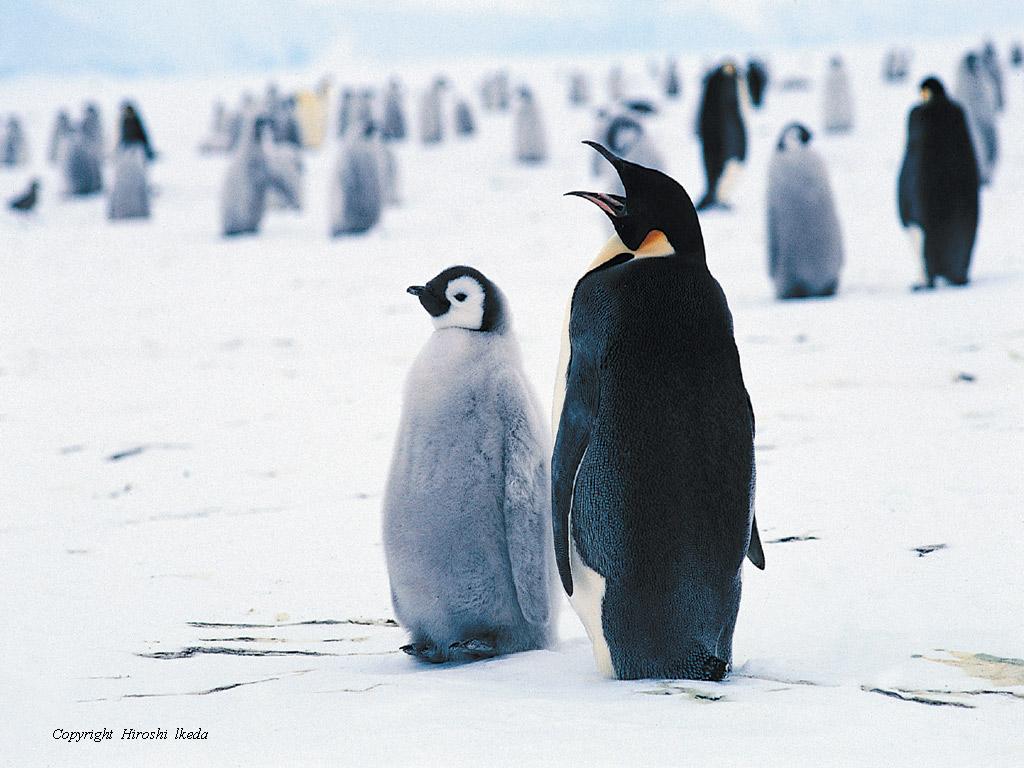 企鵝黑幫02